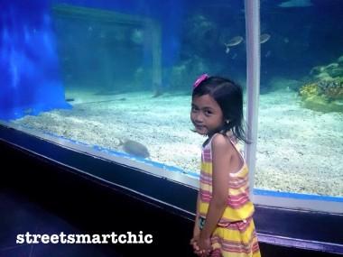 Visit Manila Ocean Park this Summer